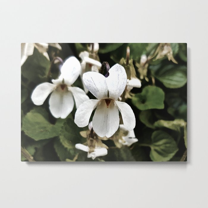 Wild White Violet; Take A Chance On Happiness Metal Print