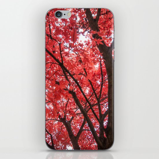 japanese maple tree iPhone Skin