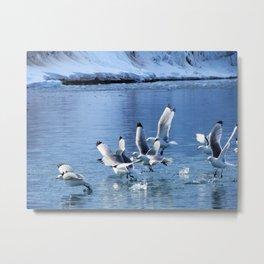 Birds in Flight Metal Print