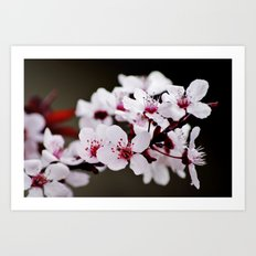 Signs of Spring 2 Art Print