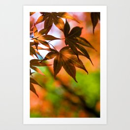 Japanese Maple in Garden - Colors of Autumn Print - Coral Foliage Wall Art - Nature Photography Art Print
