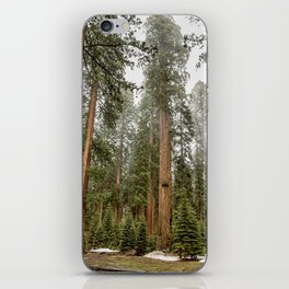 Sequoias in the Fog iPhone Skin