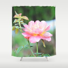 Pink Gold Rose Shower Curtain
