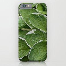 Hosta Leaves in the Rain iPhone 6s Slim Case