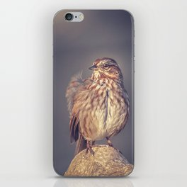 Song Sparrow iPhone Skin