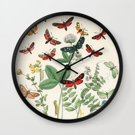 Illustrations from the book European Butterflies and Moths by William Forsell Kirby (1882) Wall Clock