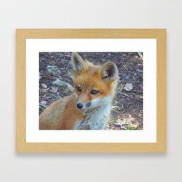 Fox 2018-1 Framed Art Print