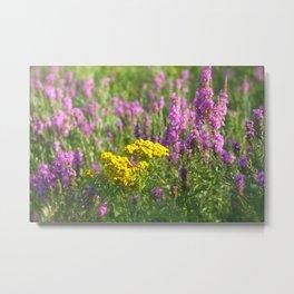 Purple Loosestrife Wildflowers Metal Print