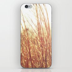 Golden  Grass iPhone & iPod Skin