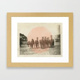 Band of Horses - Peach Framed Art Print