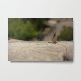 Little Visitor Metal Print