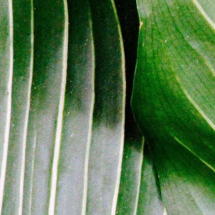 Big Leaves - Tropical Nature Photography Leggings