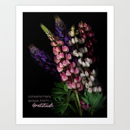 Contentment Grows from Gratitude Art Print