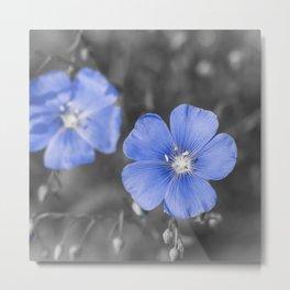 Gentle Blue Flower Metal Print