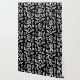 1904 Haeckel Chiroptera Wallpaper