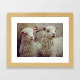 Sheep #3 Framed Art Print