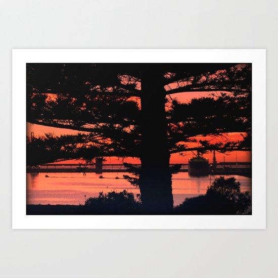 Through the Ancient Pine Art Print