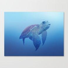 Turtle! Canvas Print