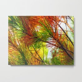 Pine branches with long and dense needles Metal Print