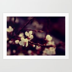 Deep Blossom Art Print