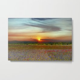 Red poppies and bluebells amid the setting sun Metal Print