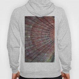 Scallop Shells Macro photography Texture Hoody