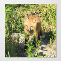 kit king Canvas Prints featuring Fox Kit by Alex Call