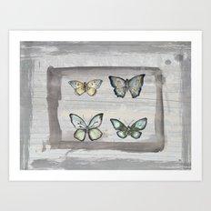 Butterfly study Art Print