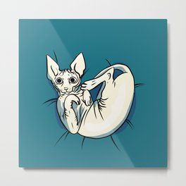 Playful Sphynx Kitty - Curled Up Nude Cat - Wrinkly Nude Cat - Blue Metal Print