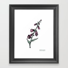 Digitalis purpurea Framed Art Print