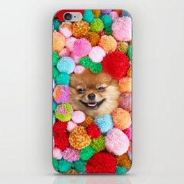 Pomeranian in the Poms iPhone Skin
