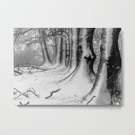 Winter Wonderland 2 Metal Print