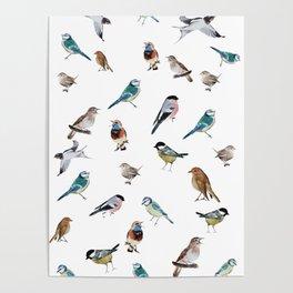 I love birds Poster