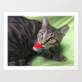 Adoptable Playful Tabby Cat, Pete Art Print