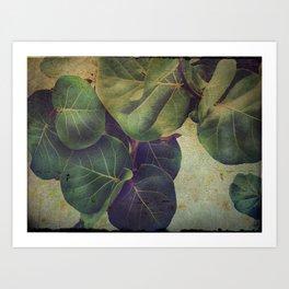 Sea Grape Art Print