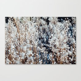 Snow Grass Canvas Print
