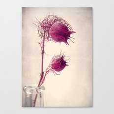 bristly Canvas Print