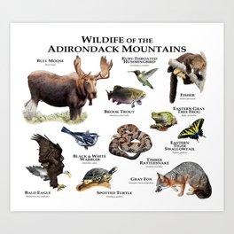 Animals of the Adirondacks Art Print