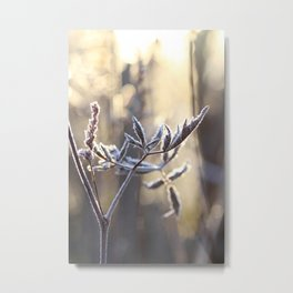 frost light Metal Print
