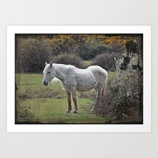 New Forest Pony Art Print