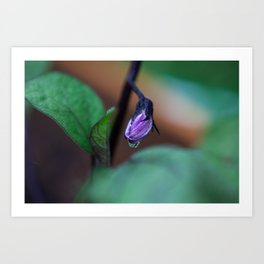 Eggplant Bud Art Print