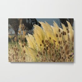 Tails of fox and thistles in the pampas. Metal Print
