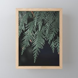 Moody Evergreen No.02 Framed Mini Art Print