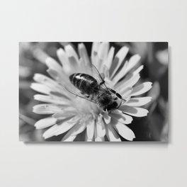 B&W Bee Metal Print