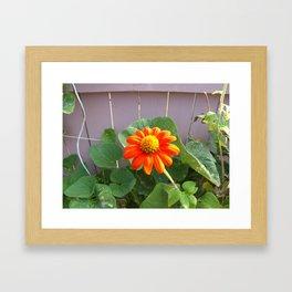 brightly O Framed Art Print