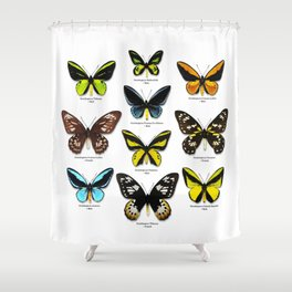 Butterfly012_Ornithoptera Set1 on White Background Shower Curtain