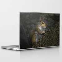 squirrel Laptop & iPad Skins featuring Squirrel by Judith Lee Folde Photography & Art