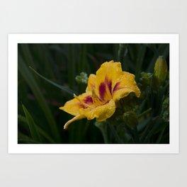 Arachnid on a Wet Flower Art Print