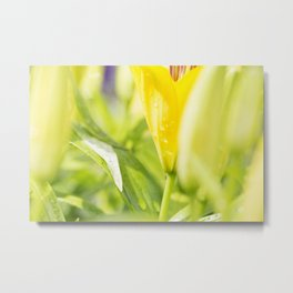 Asiatic Lily 14 Metal Print