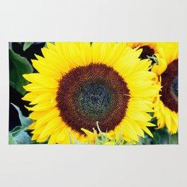 Big sunflower under the sun Rug
